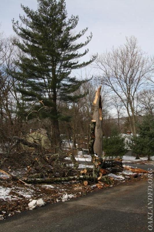 Tree snapped in half on Seneca Ave